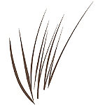 Ardell Online Only Stroke A Brow Feathering Pen Medium Browm